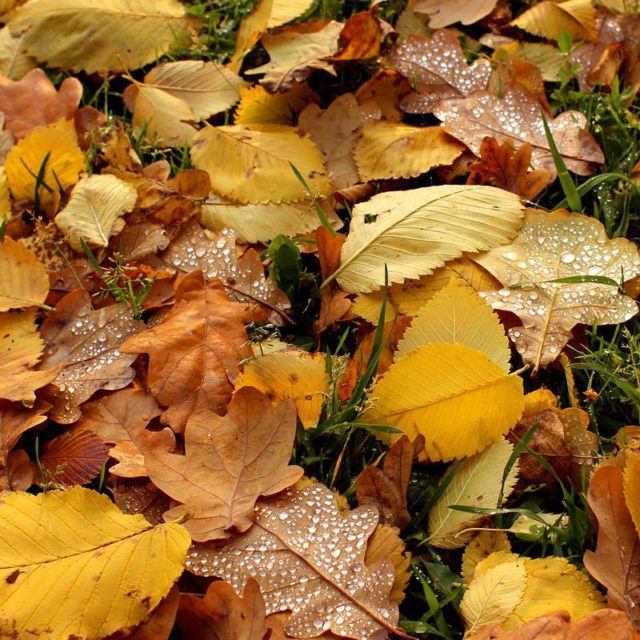 The autumn leaves    hellip